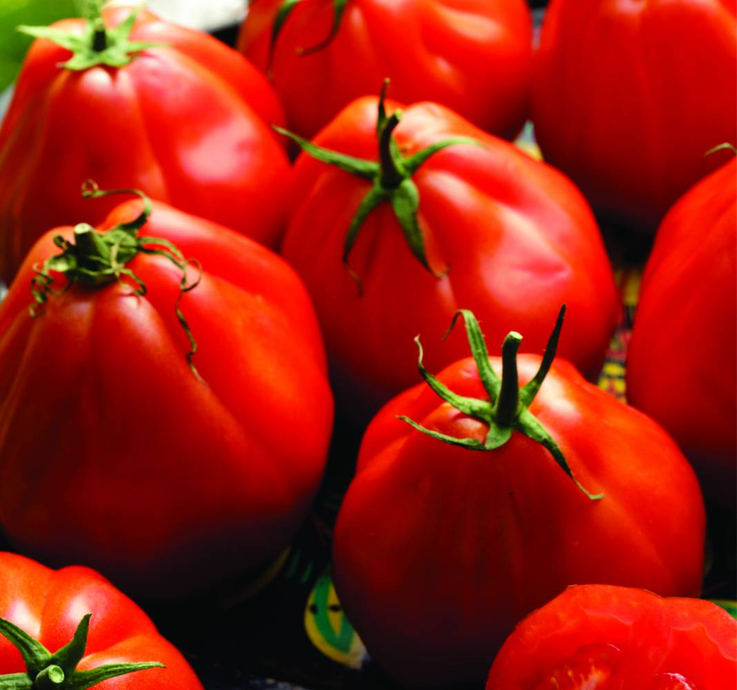 Resultado de imagem para tomate coração de boi