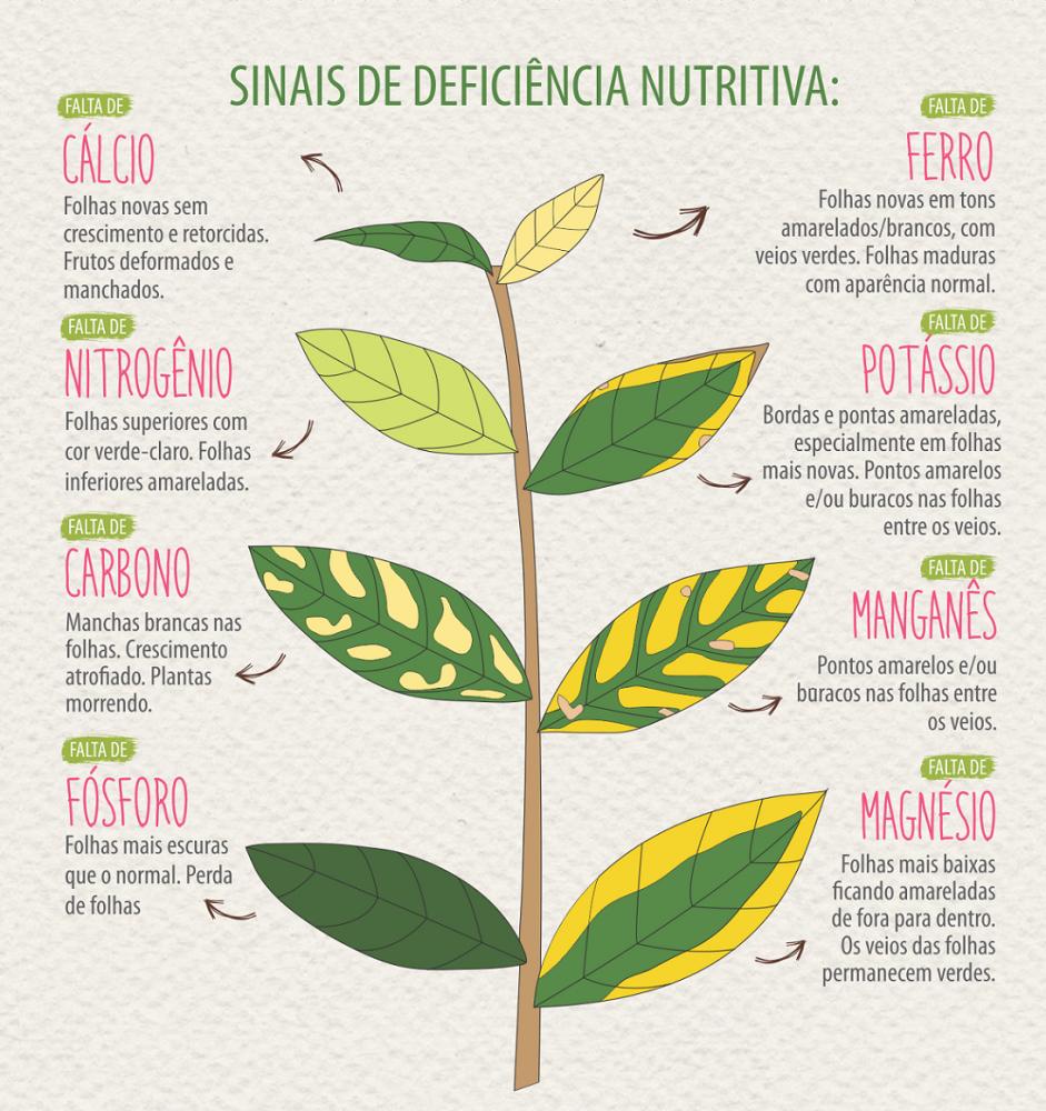 Blog_Campanha Fertigarden-Pp