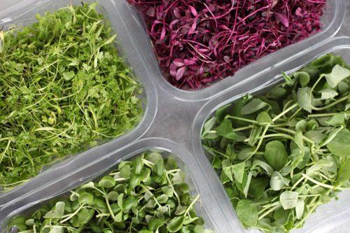 Microverdes coloridos na horta em casa ou apartamento