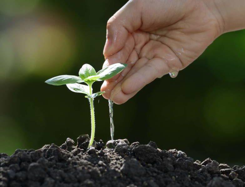 Cuidar da horta é como dar amor à natureza